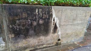 Sitzmauer Algenbefall Reinigung